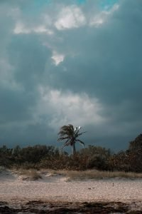 Storm weather in Venice Florida beach with palm tree..