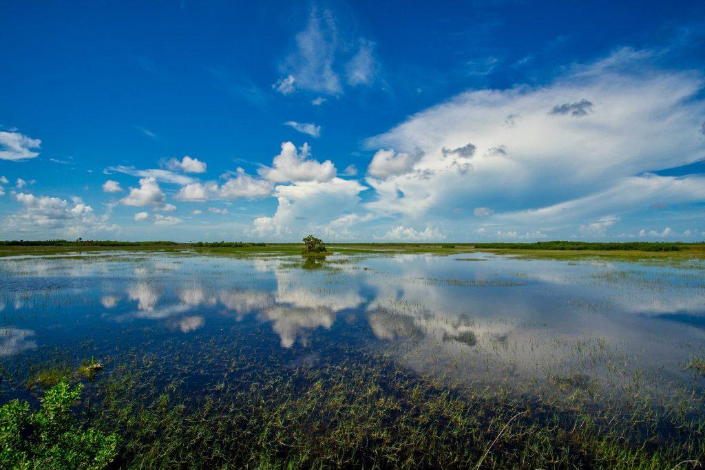 Florida wetlands for sale regulations.